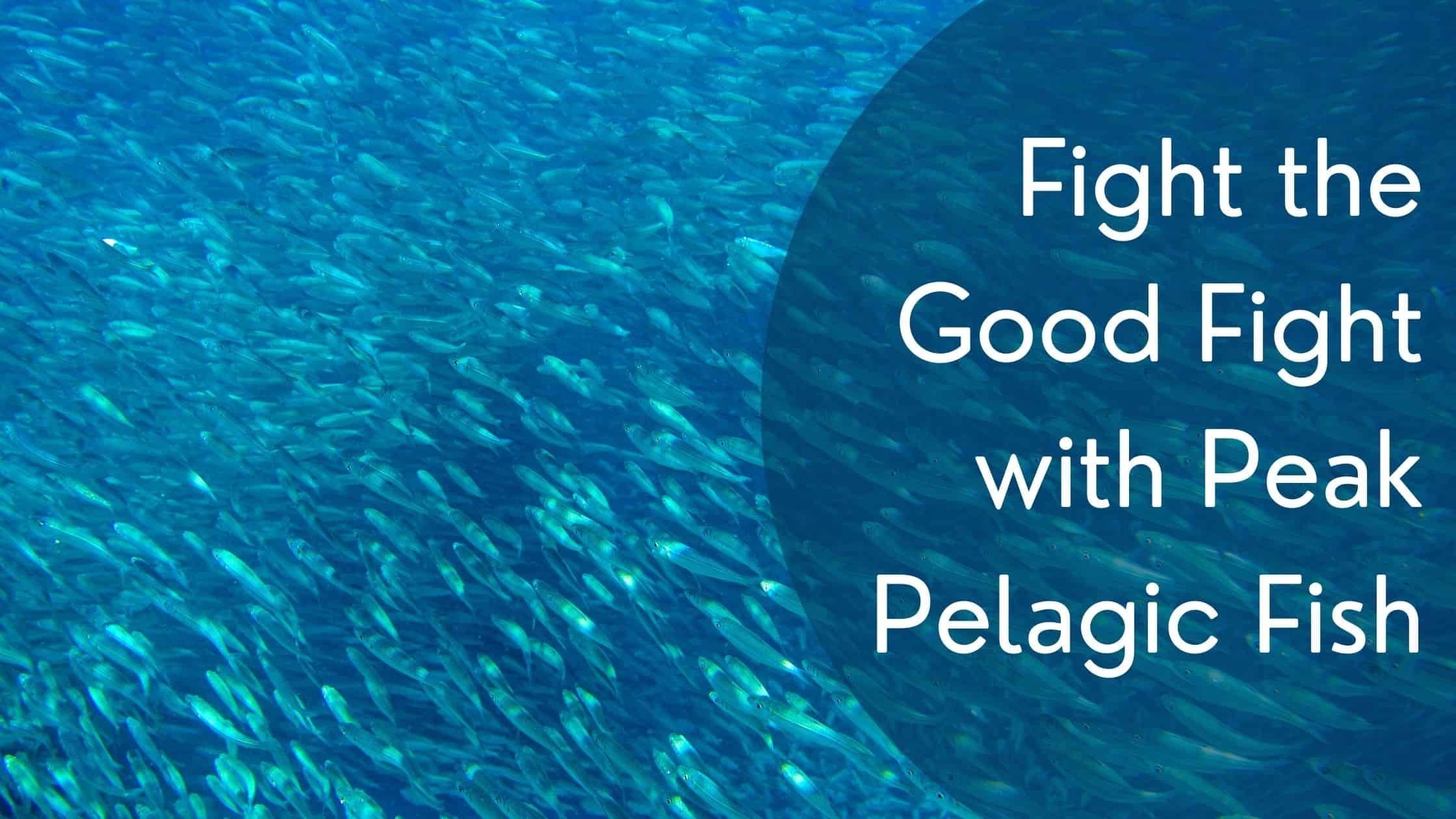 """Featured image for """"Fight the Good Fight with Peak Pelagic Fish"""""""